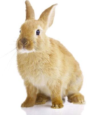 beddings for breedings | bedding for rabbits | trucioli & derivati srl